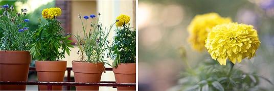 Blumen Balkon Gelb Blau
