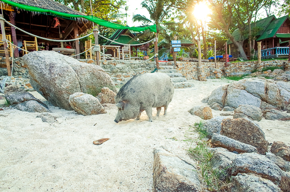 Haad Khom Koh Phangan Coral Bay Dukdik